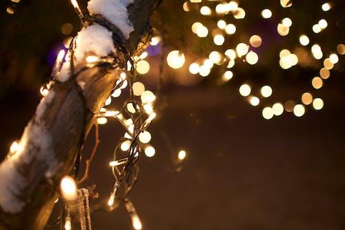 Foto d'estoc gratuïta de amor, arbre de Nadal, clareja, decoració nadalenca