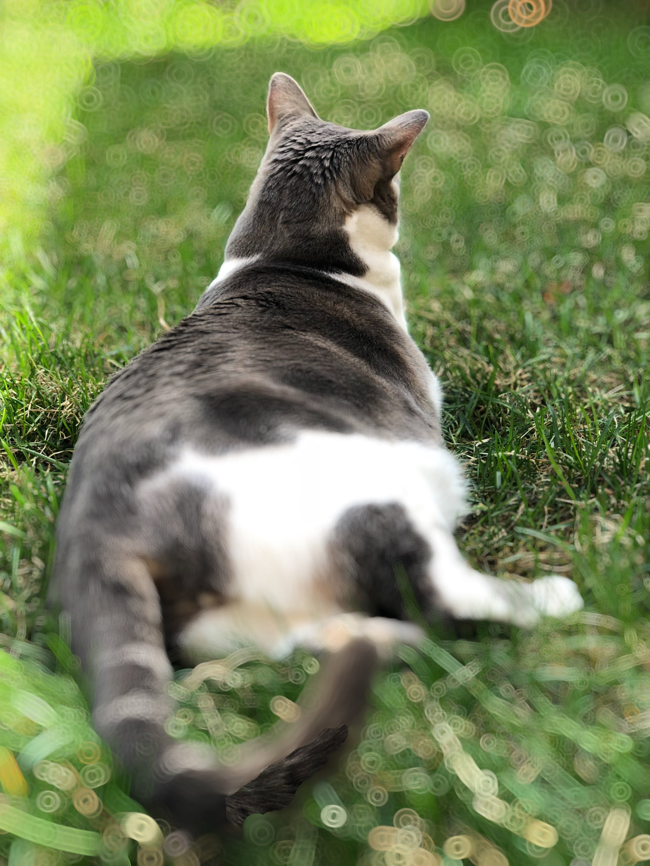 Free stock photo of animal, cat, garden, outdoor