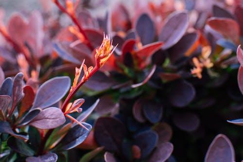 Foto profissional grátis de close, macro, planta