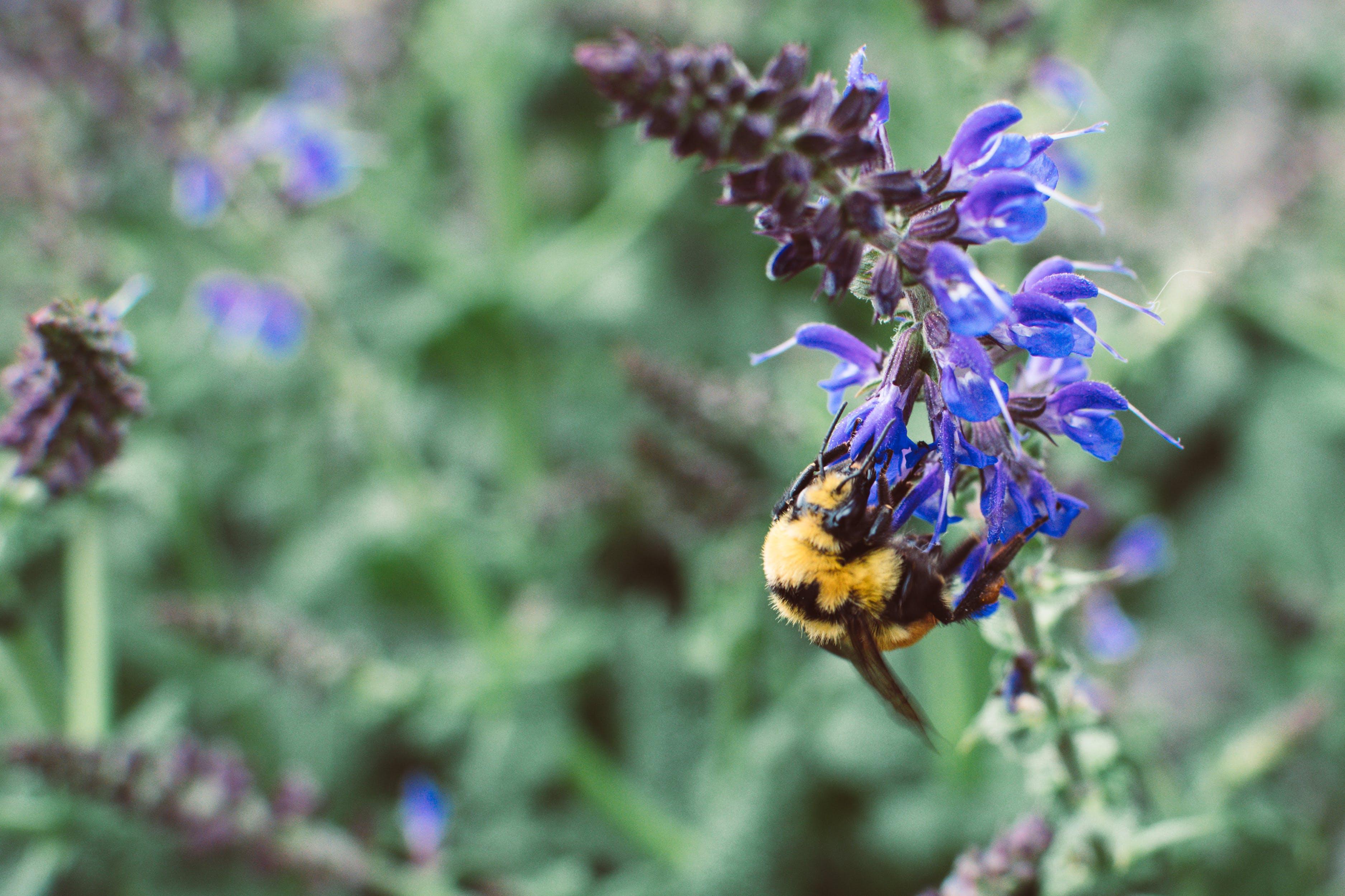Yellow And Black Honeybee