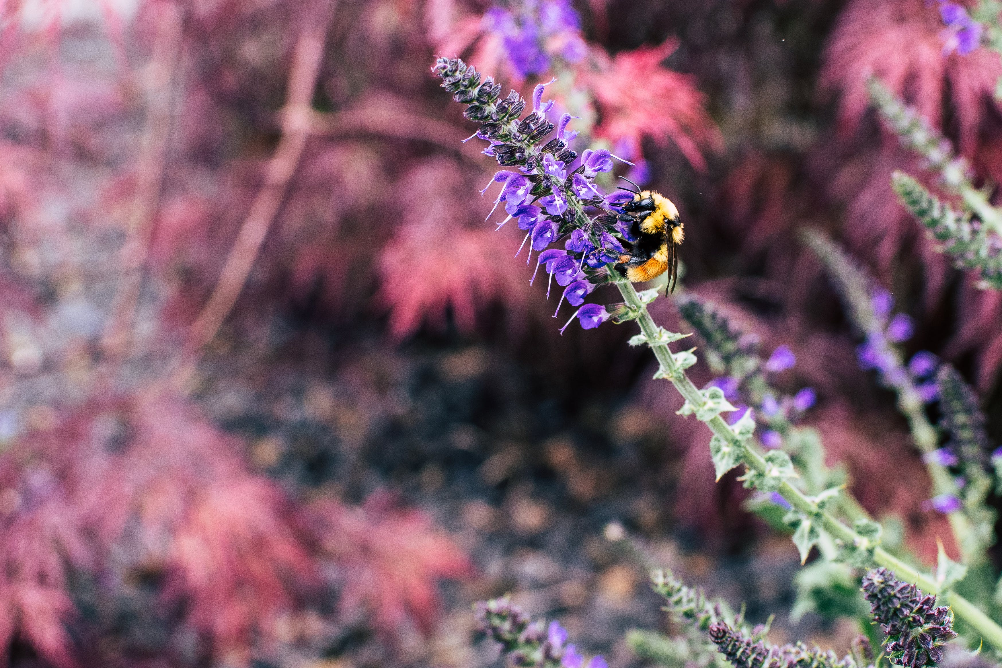 Bee Sipping Nectars on Flower