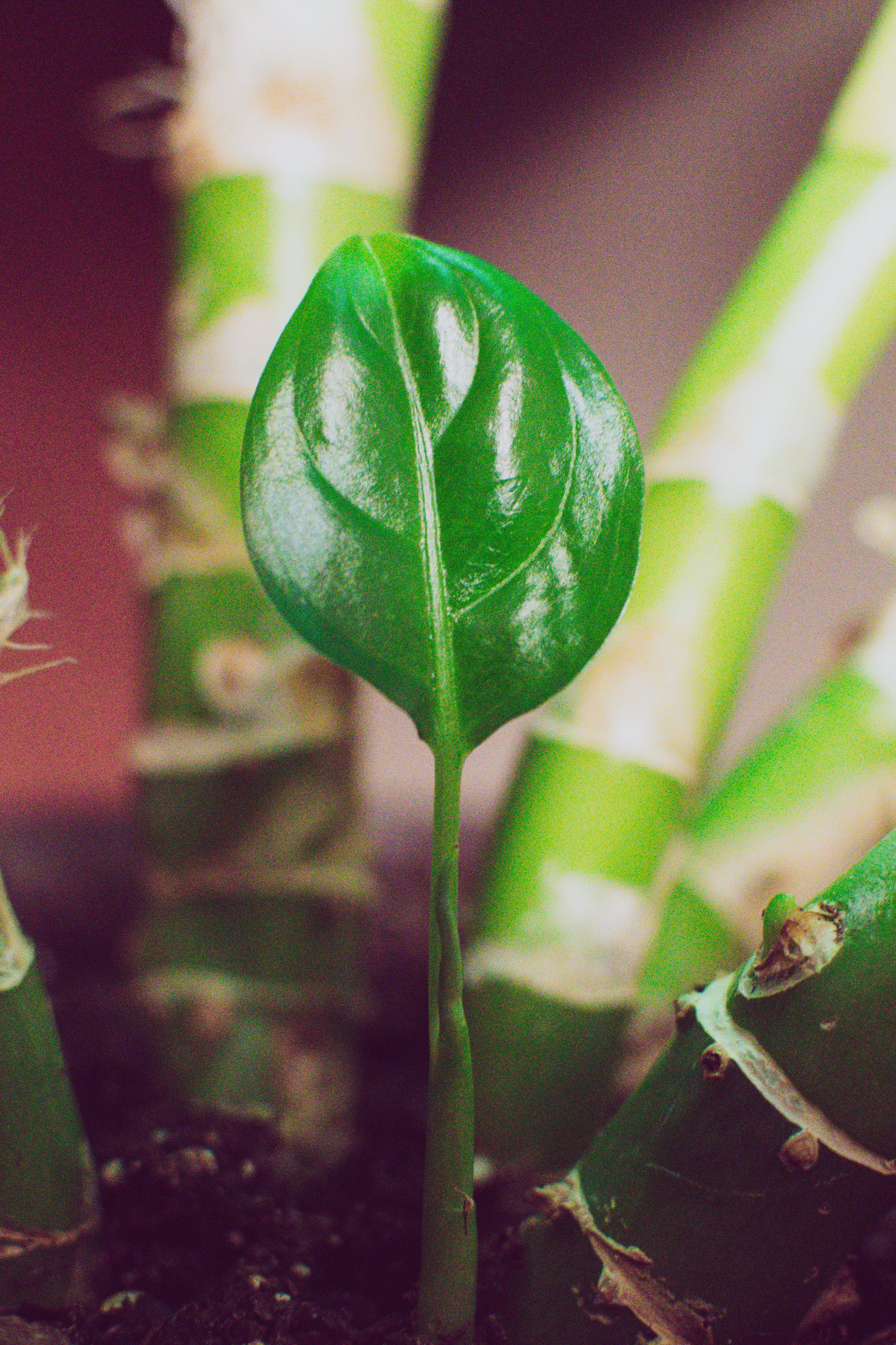 Ilmainen kuvapankkikuva tunnisteilla kasvi, kasvu, kattila, kevyt