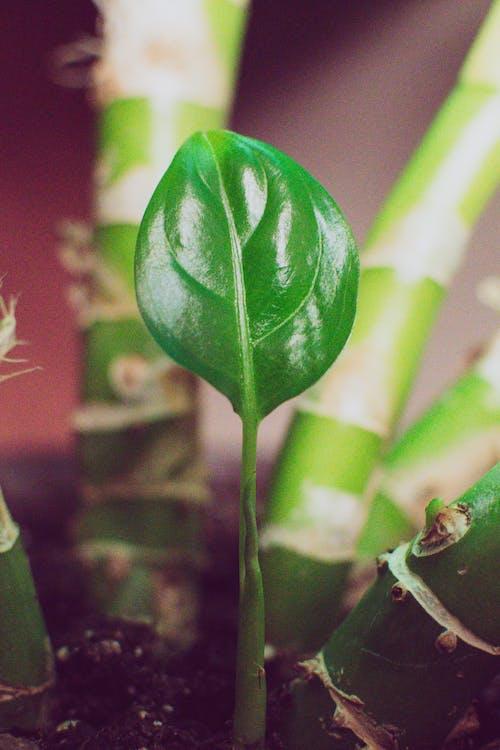 가벼운, 냄비, 녹색, 반짝반짝 빛나는의 무료 스톡 사진