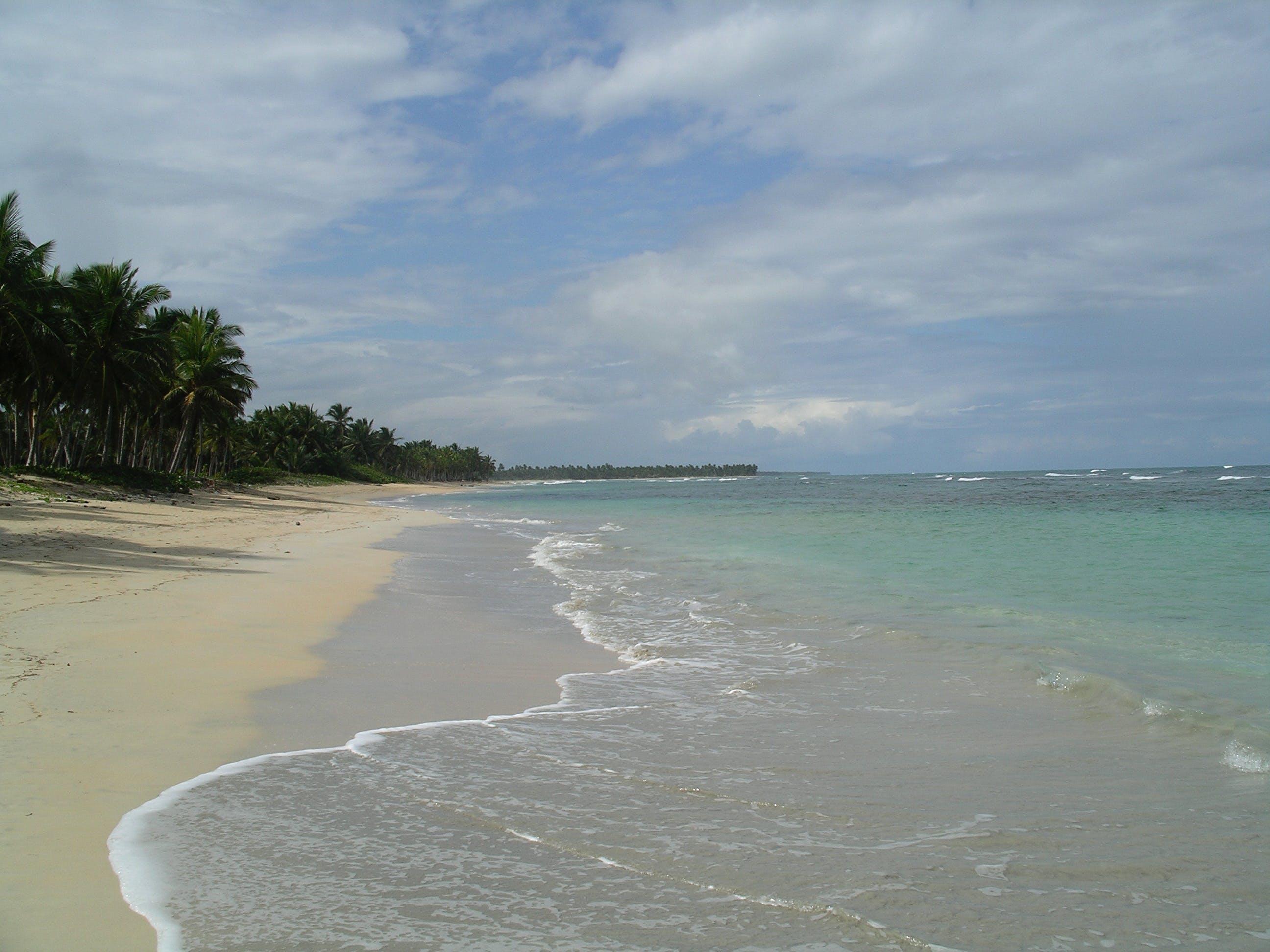 Free stock photo of beach, ocean, palm trees, sand