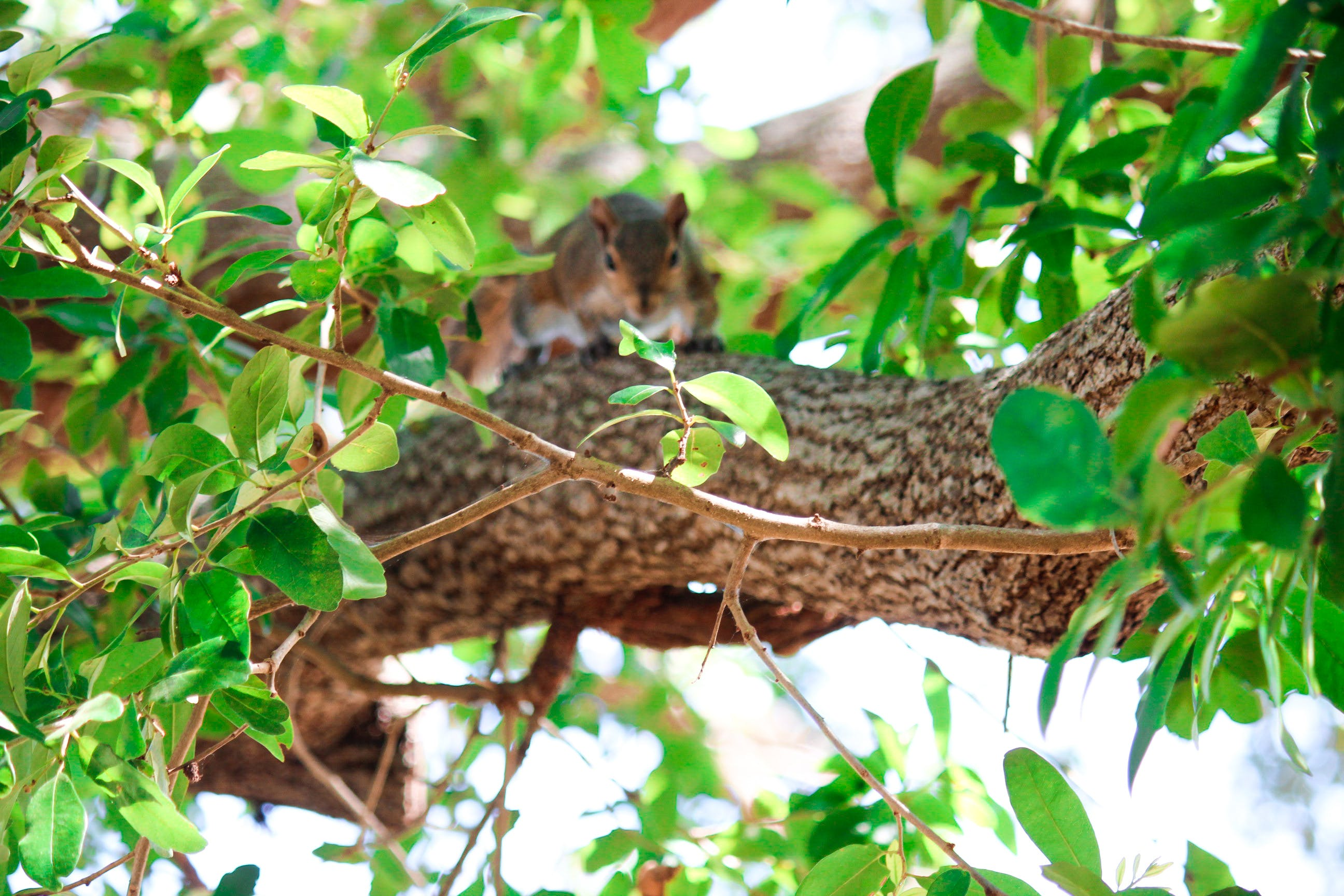 Free stock photo of #wildlife, animal, branches, green