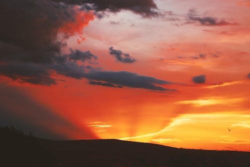 Fotos de stock gratuitas de amanecer, arboles, bonito, cielo