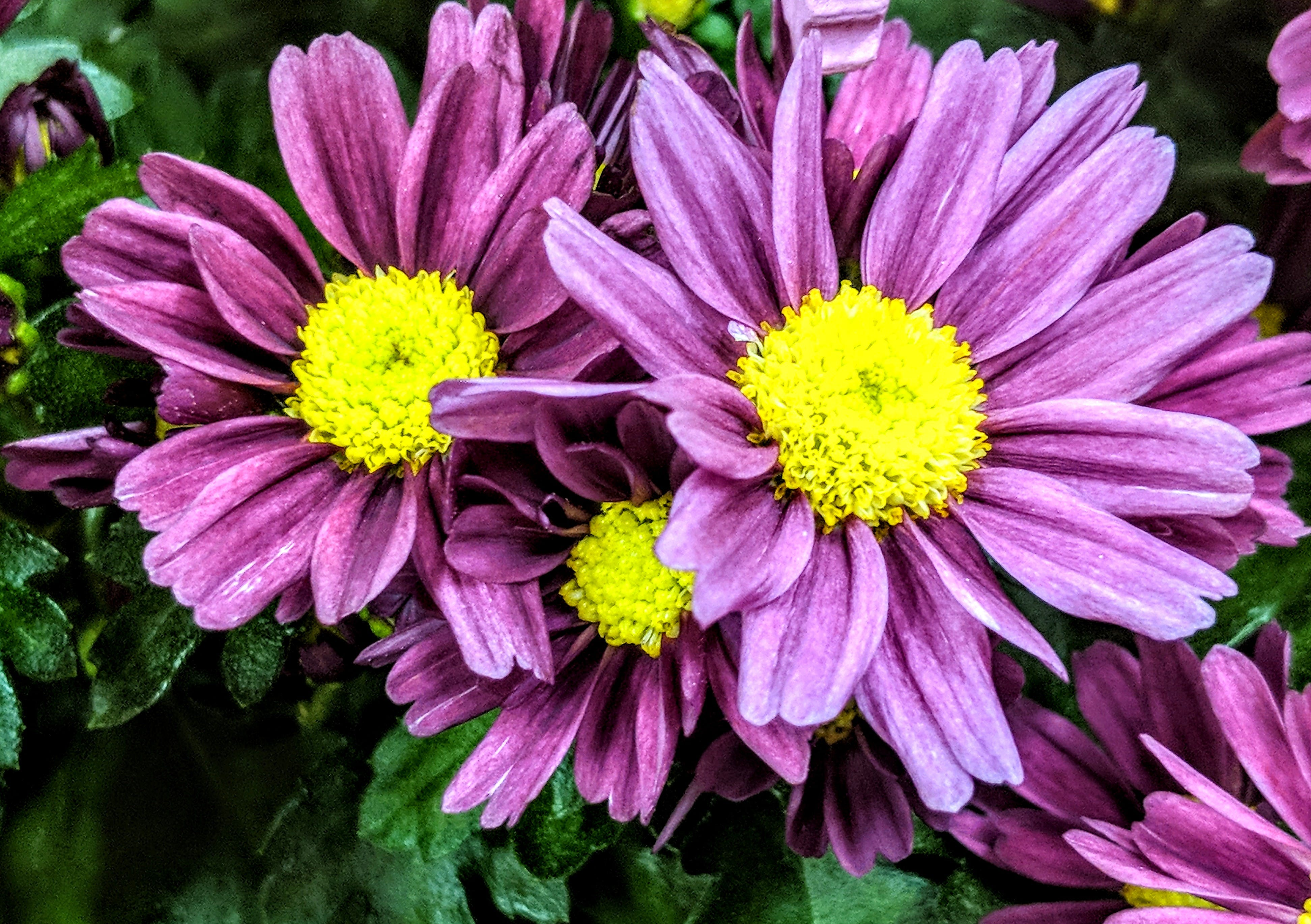 Close-up Photo Of Purple Petaled Flowers