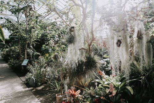 Plants Inside Greenhouse