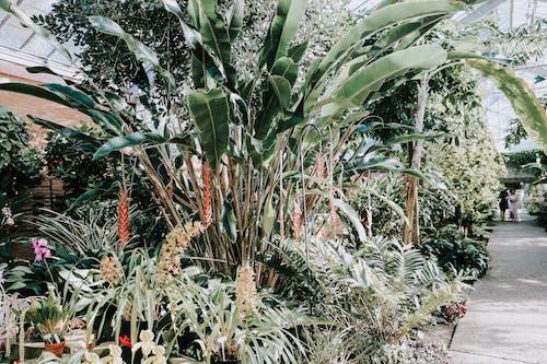 Foto d'estoc gratuïta de botànic, color, creixement, exòtic