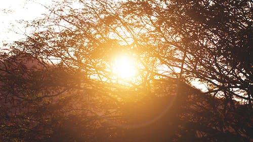 คลังภาพถ่ายฟรี ของ กิ่ง, ดวงอาทิตย์, ตอนเย็น, ตะวันลับฟ้า