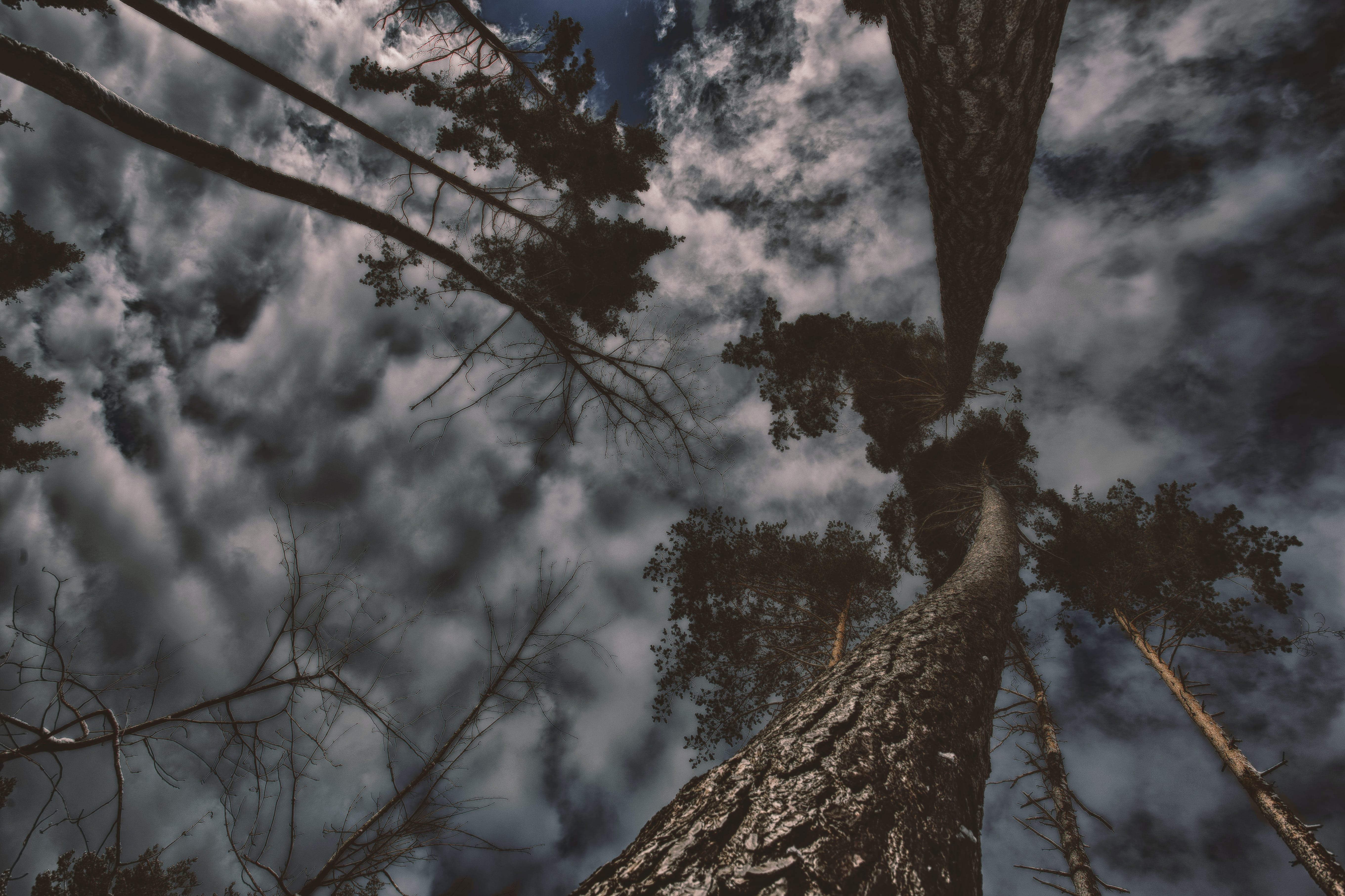Photo of Gray Trees With Clouds