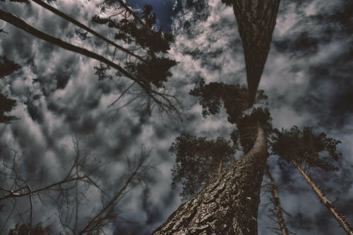 Kostenloses Stock Foto zu aufnahme von unten, bäume, dämmerung, himmel