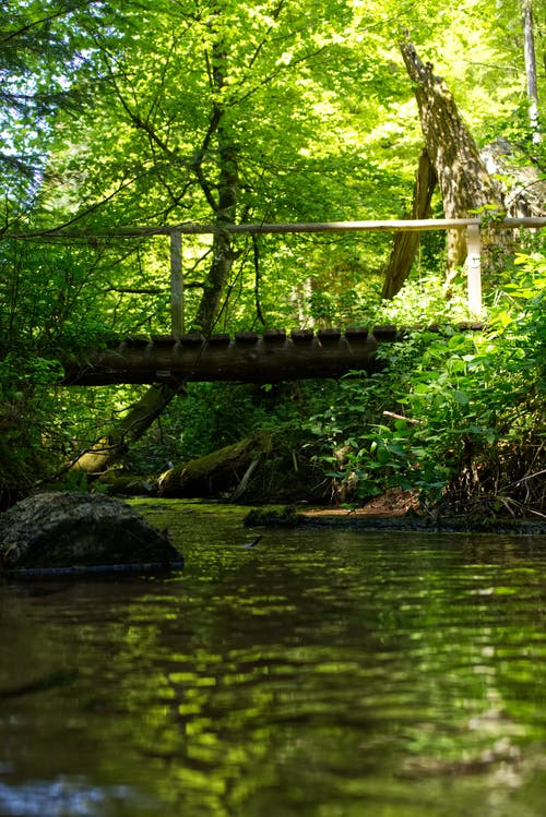 Free stock photo of blue water, bridge, forest