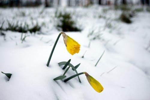 Gratis arkivbilde med #outdoorchallenge, #skog, #tiny