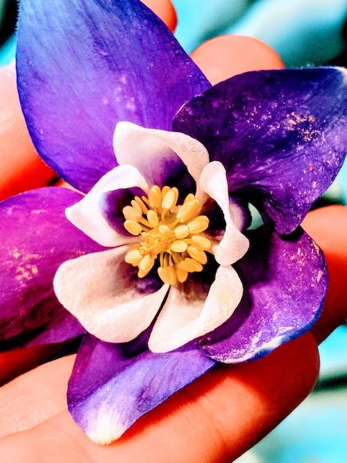 Fotobanka sbezplatnými fotkami na tému flóra, kvet, kvet ovocného stromu, kvitnutie