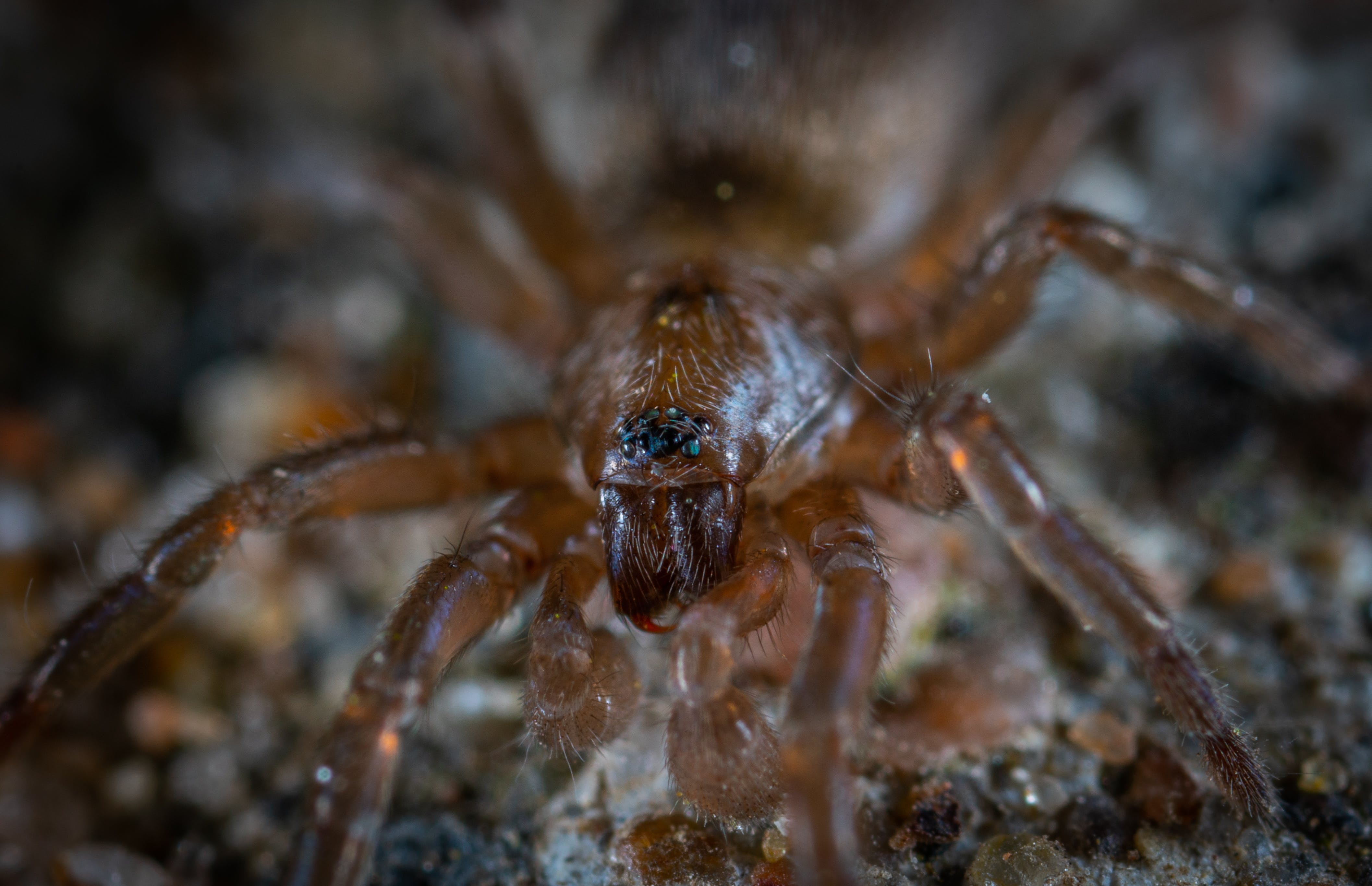 Focus Photo of Brown and Black Spider