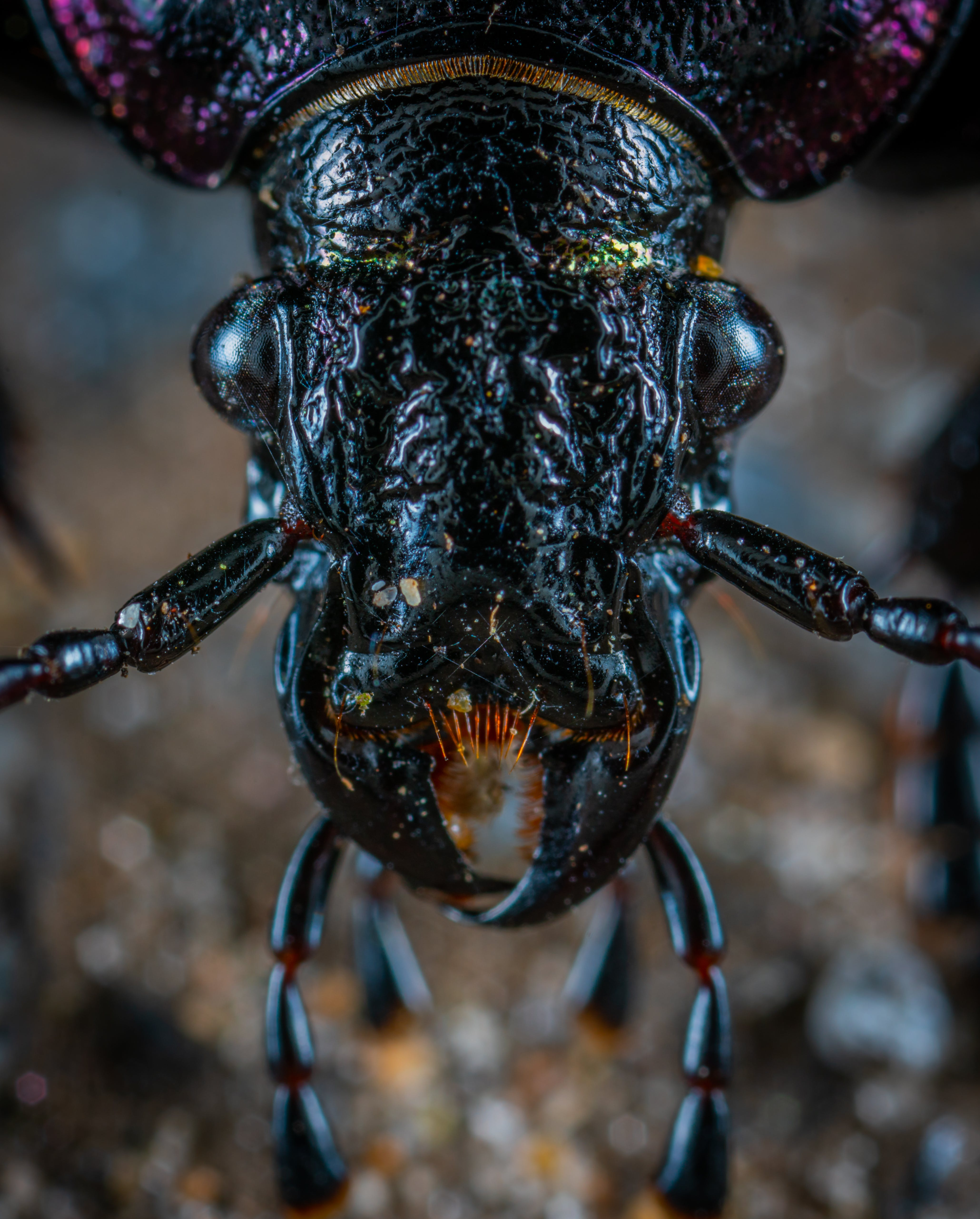 Closeup Photo of Black Insect