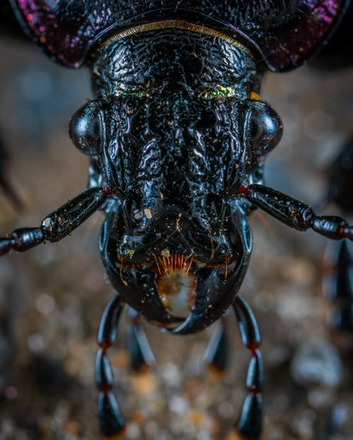 Fotobanka sbezplatnými fotkami na tému chrobák, čierna, denné svetlo, detailný záber