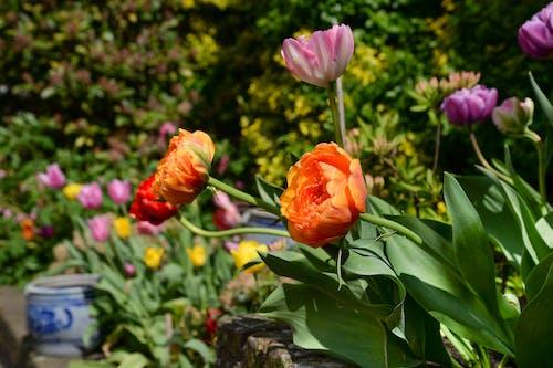 Photo of Orange and Purple Flowers