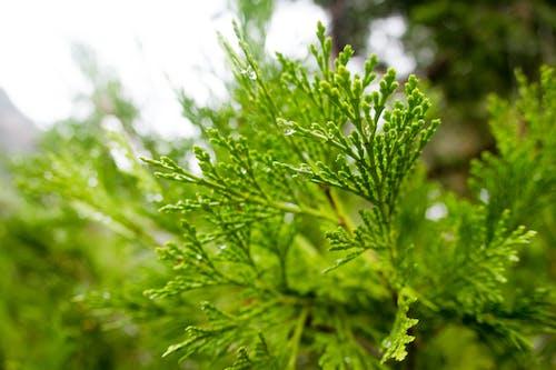 Photos gratuites de après la pluie, arbre, eau, forêt