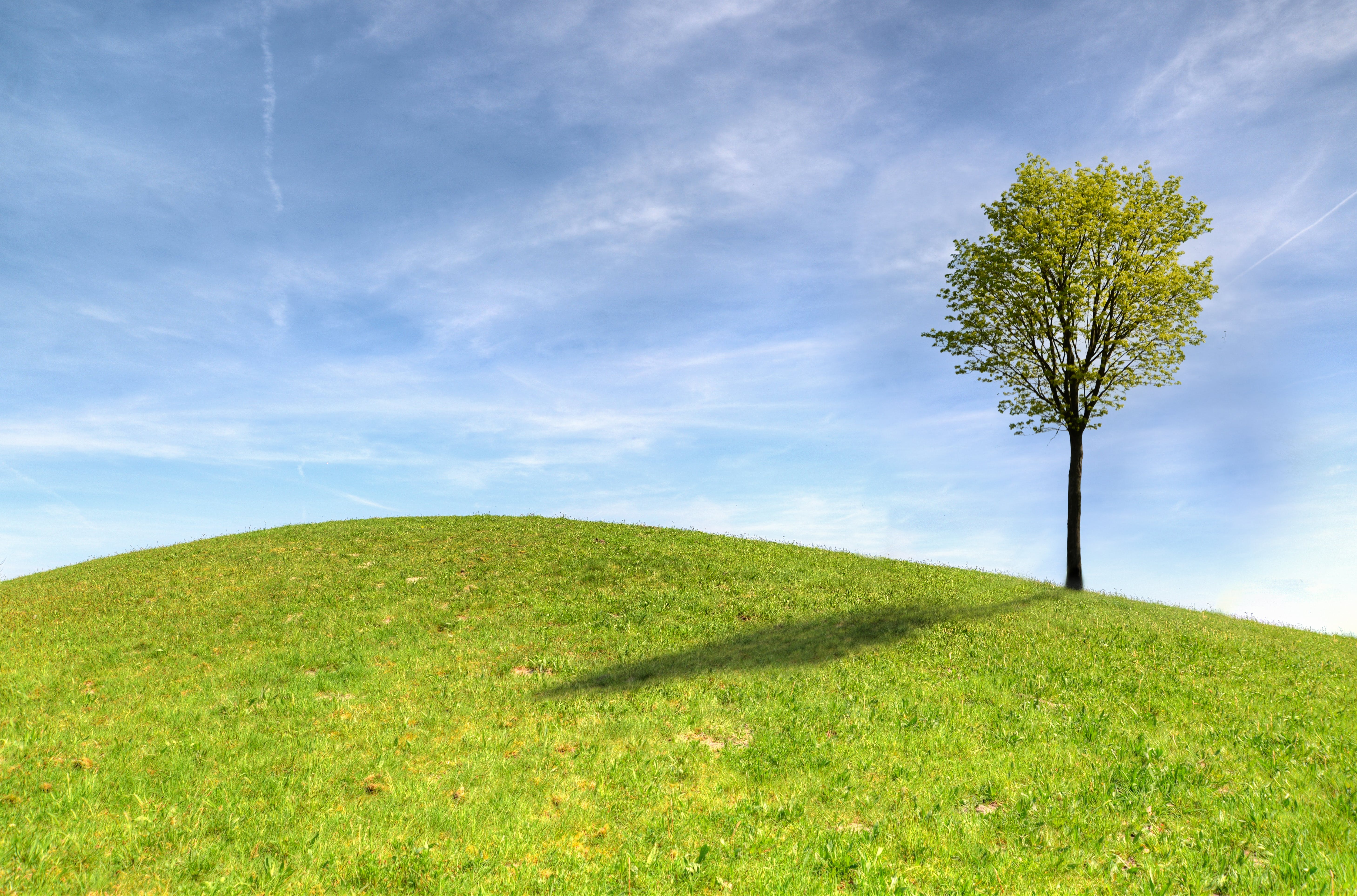 Green Tree on Green Grass Field Under White Clouds and Blue Sky