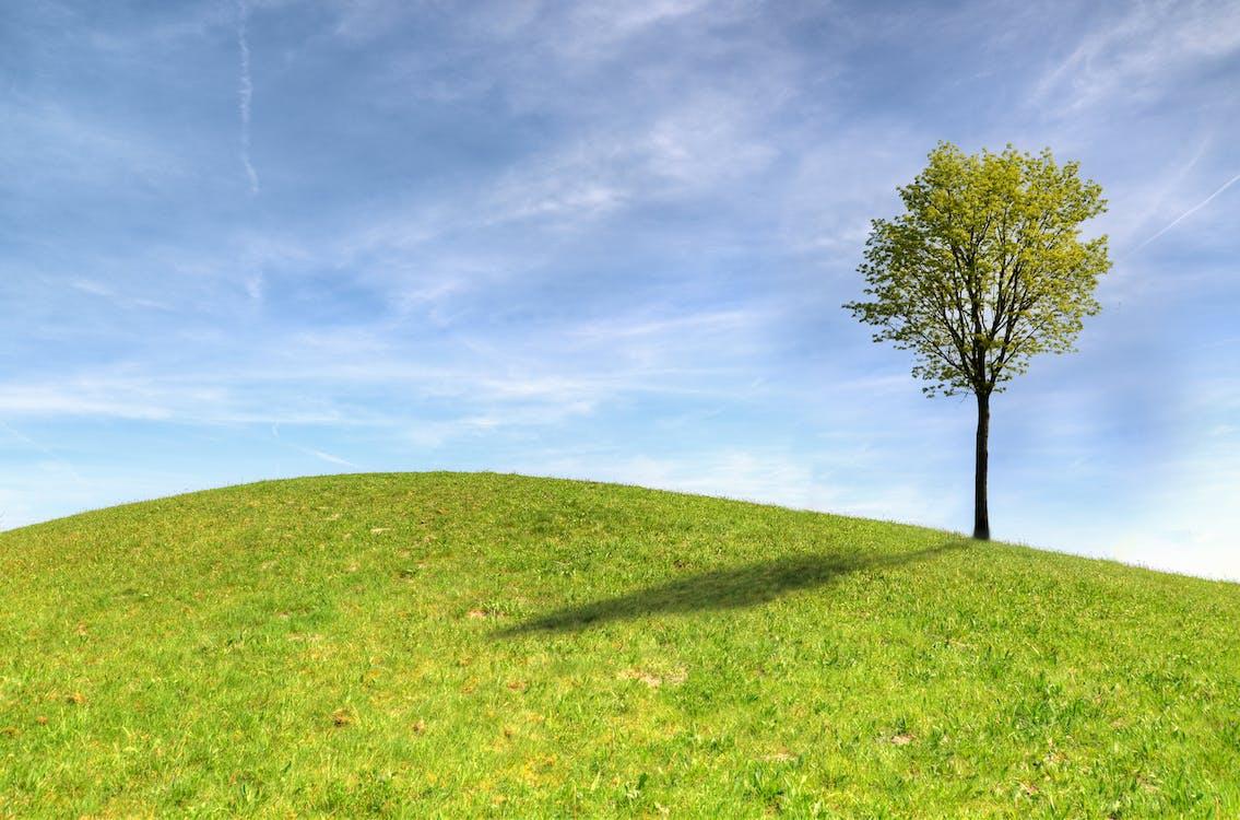 bãi cỏ, bầu trời, bình dị