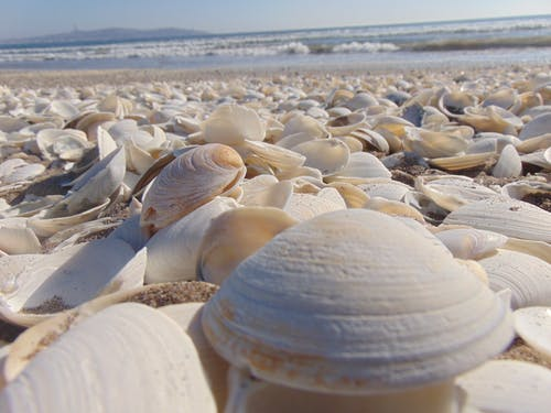 Pile of Beige Seashells Near Seashore