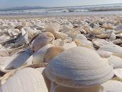 sea, beach, shells