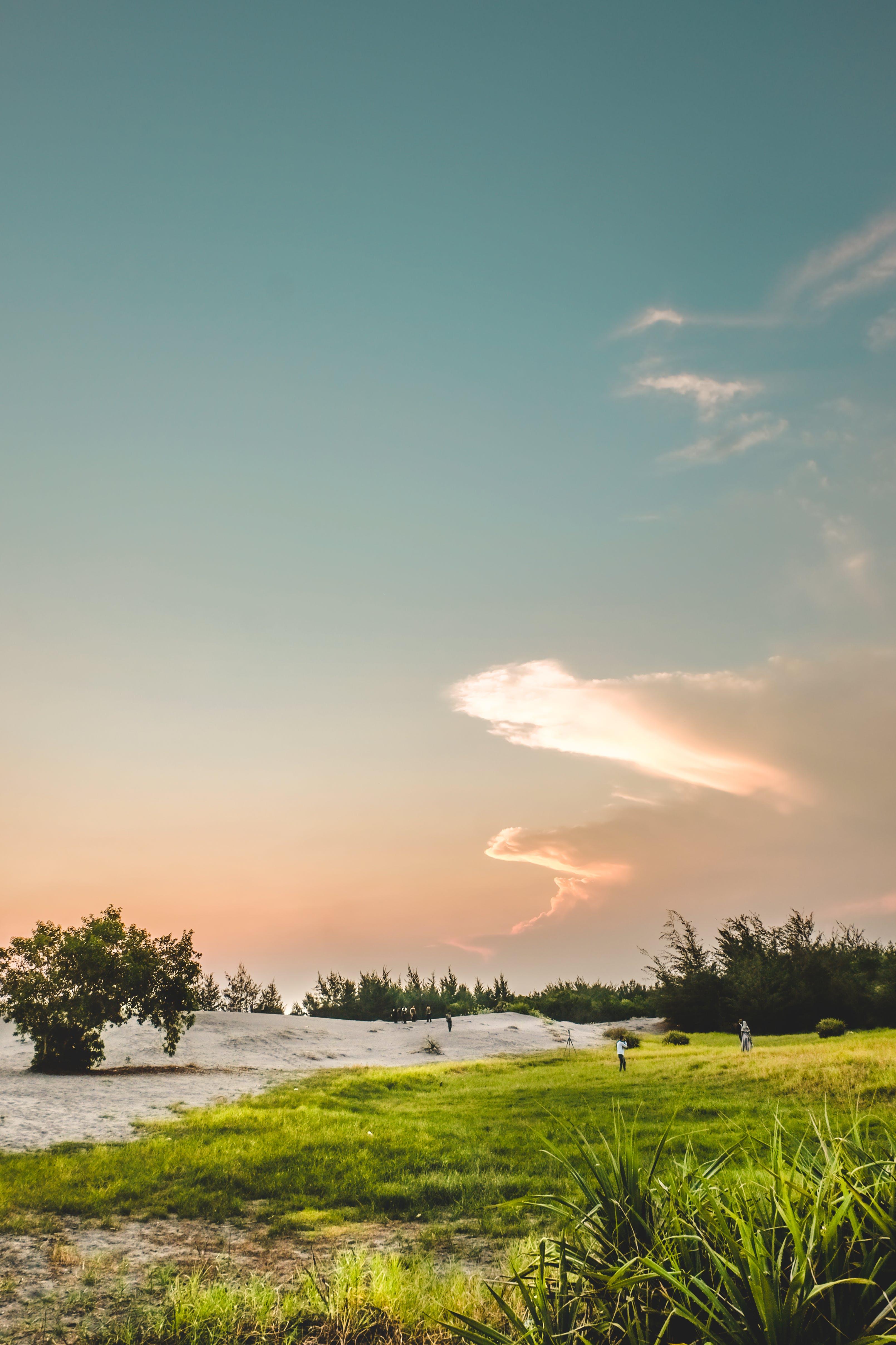 Gratis lagerfoto af blå, blå himmel, cattoncandy, græs