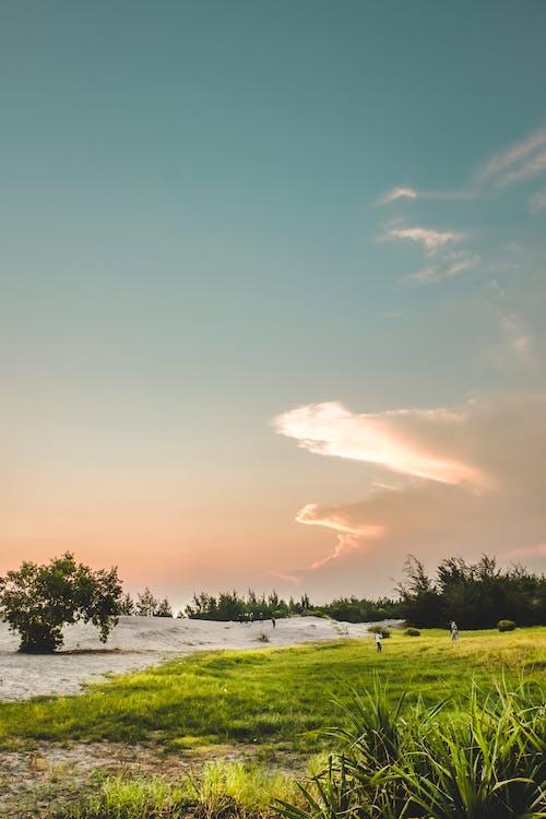광신도, 녹색, 모래, 백사장의 무료 스톡 사진