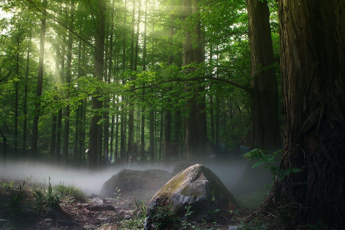 Photos gratuites de arbres, bois, brouillard