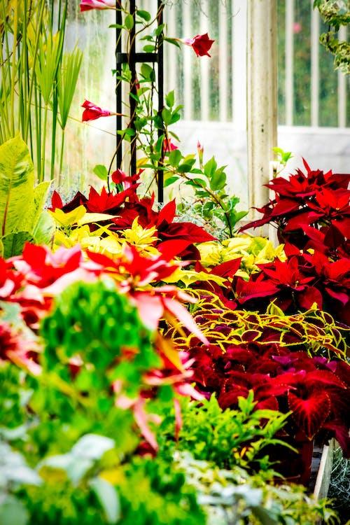 Photos gratuites de brillant, couleur, croissance, fleurs