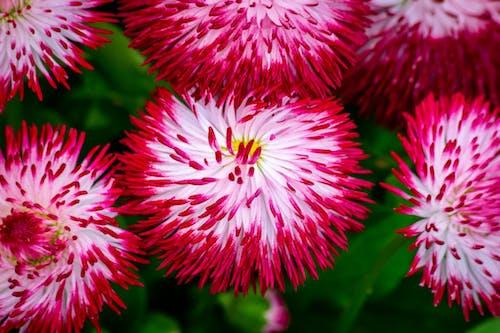 Photos gratuites de botanique, brillant, centrale, couleurs