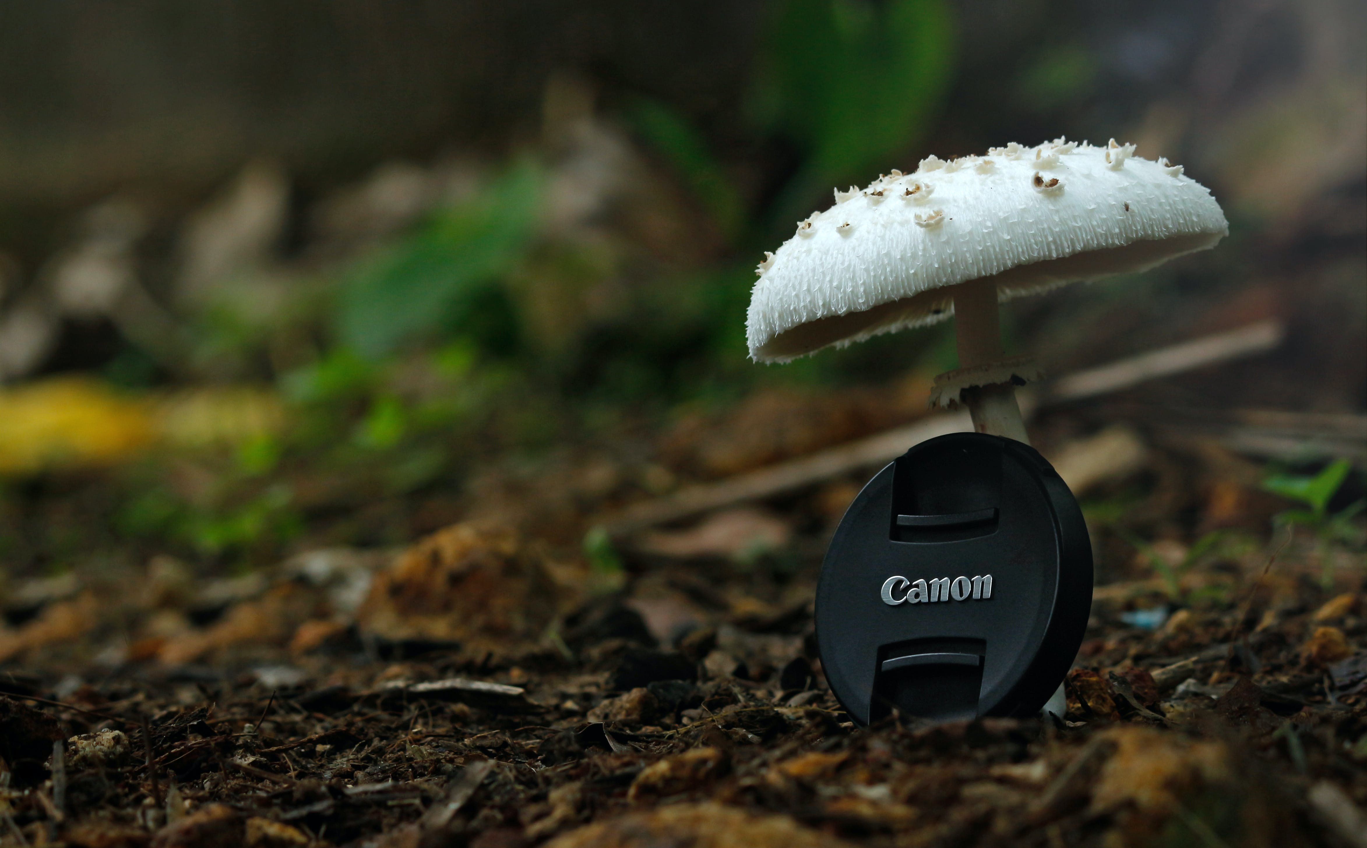 White Button Mushroom With Black Canon Camera Zoom Lens Cover