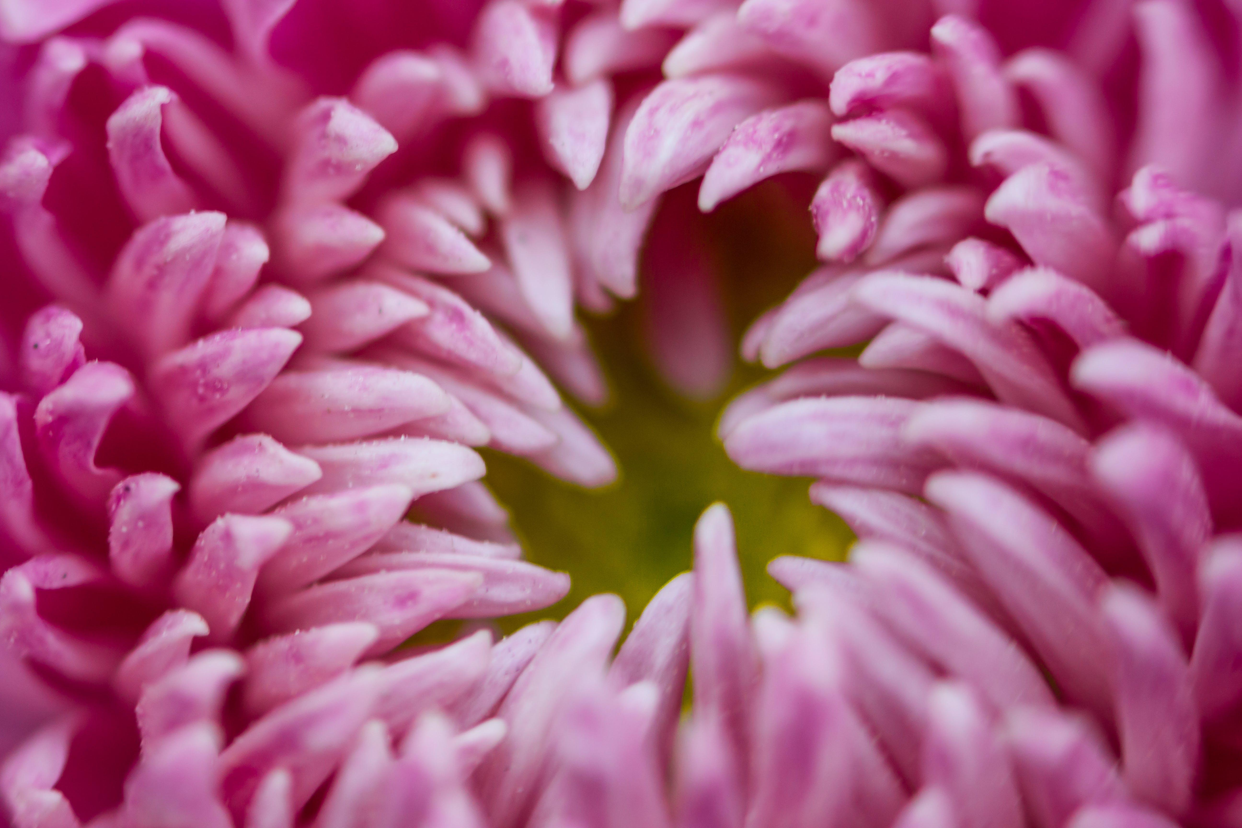 Macro Photography of Flower Petals