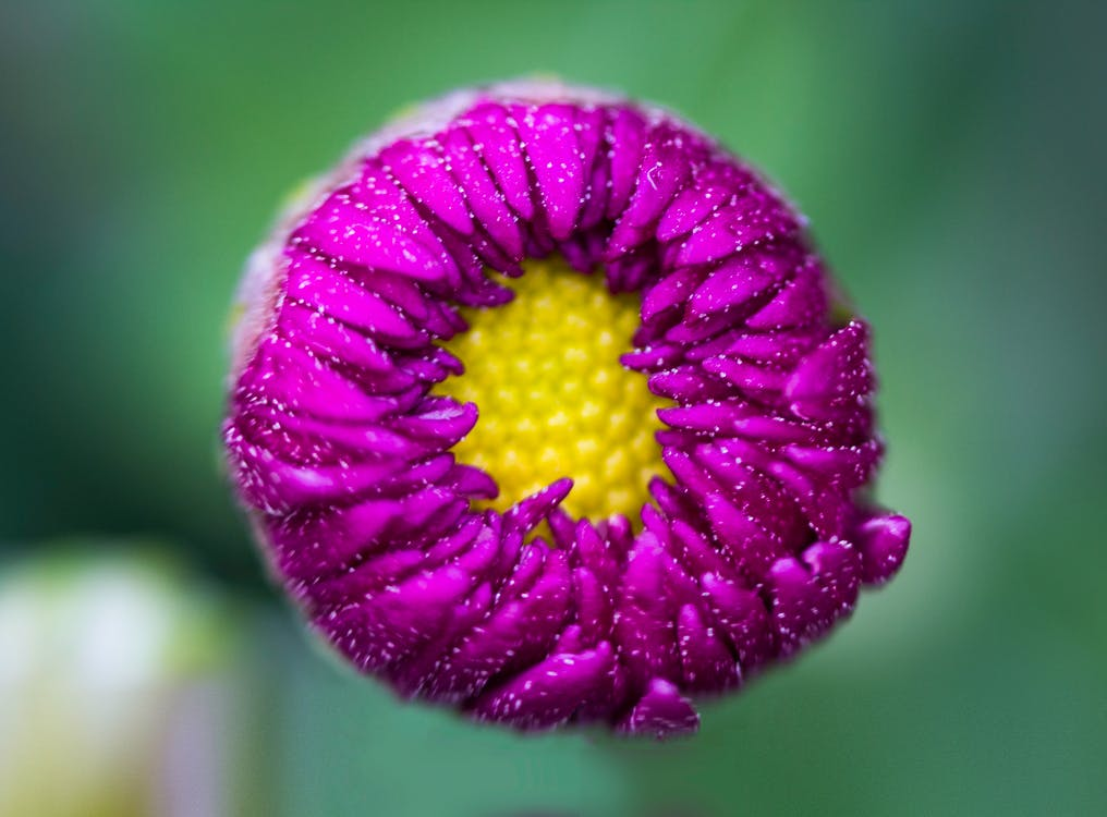 Macro Shot Photography of Purple Flower