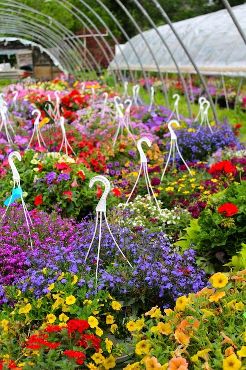 Photos gratuites de arc-en-ciel, couleurs, fleur, fleurs