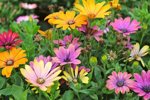 Photos gratuites de couleurs, fleurs, violet