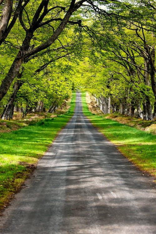 domb, fák, út