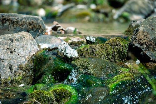 Photos gratuites de cailloux, eau, flot, mousse