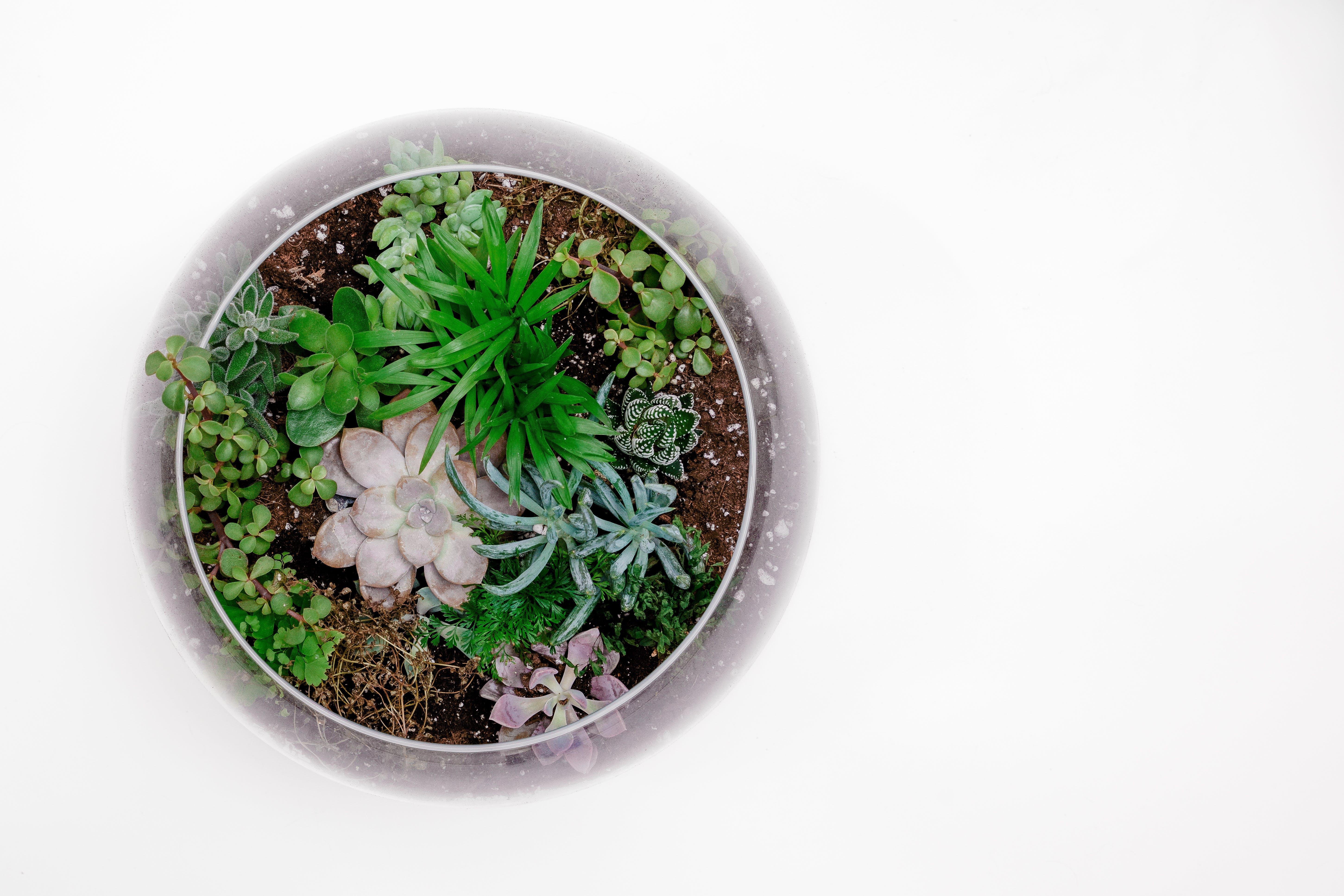 Green Succulent Plant in Terrarium