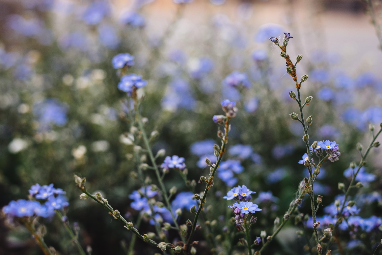 Closeup Photography of Purple Petaled Flowers