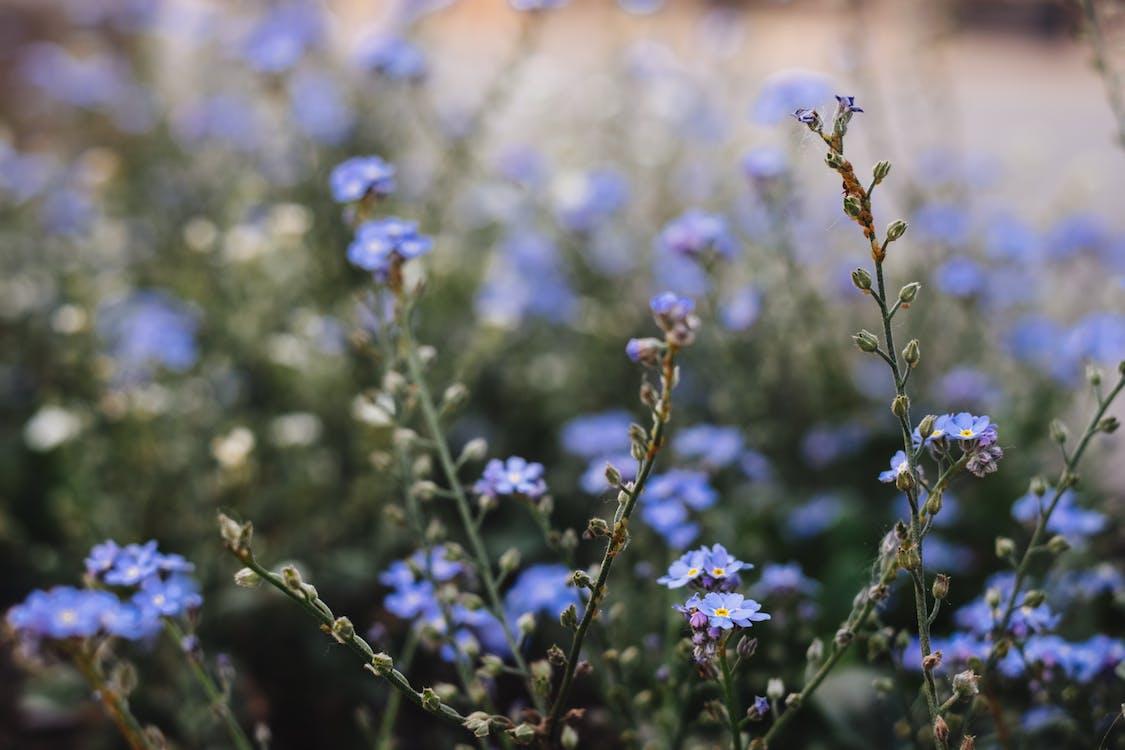 kasvikunta, kasvit, kasvu