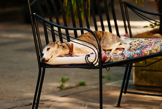 Photo of a White Grey and Brown Short Coated Dog Laying on a Black Metal Frame Multi-colored Padded Armchair