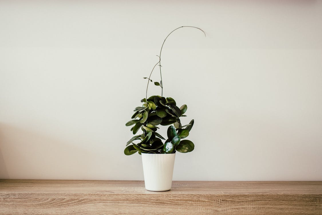 Green Plant With White Ceramic Pot
