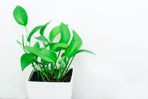 Bahçe, bitki örtüsü, büyüme, çevre içeren Ücretsiz stok fotoğraf