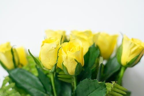 美麗的花朵, 黃色, 黃色的花朵, 黃花 的 免費圖庫相片