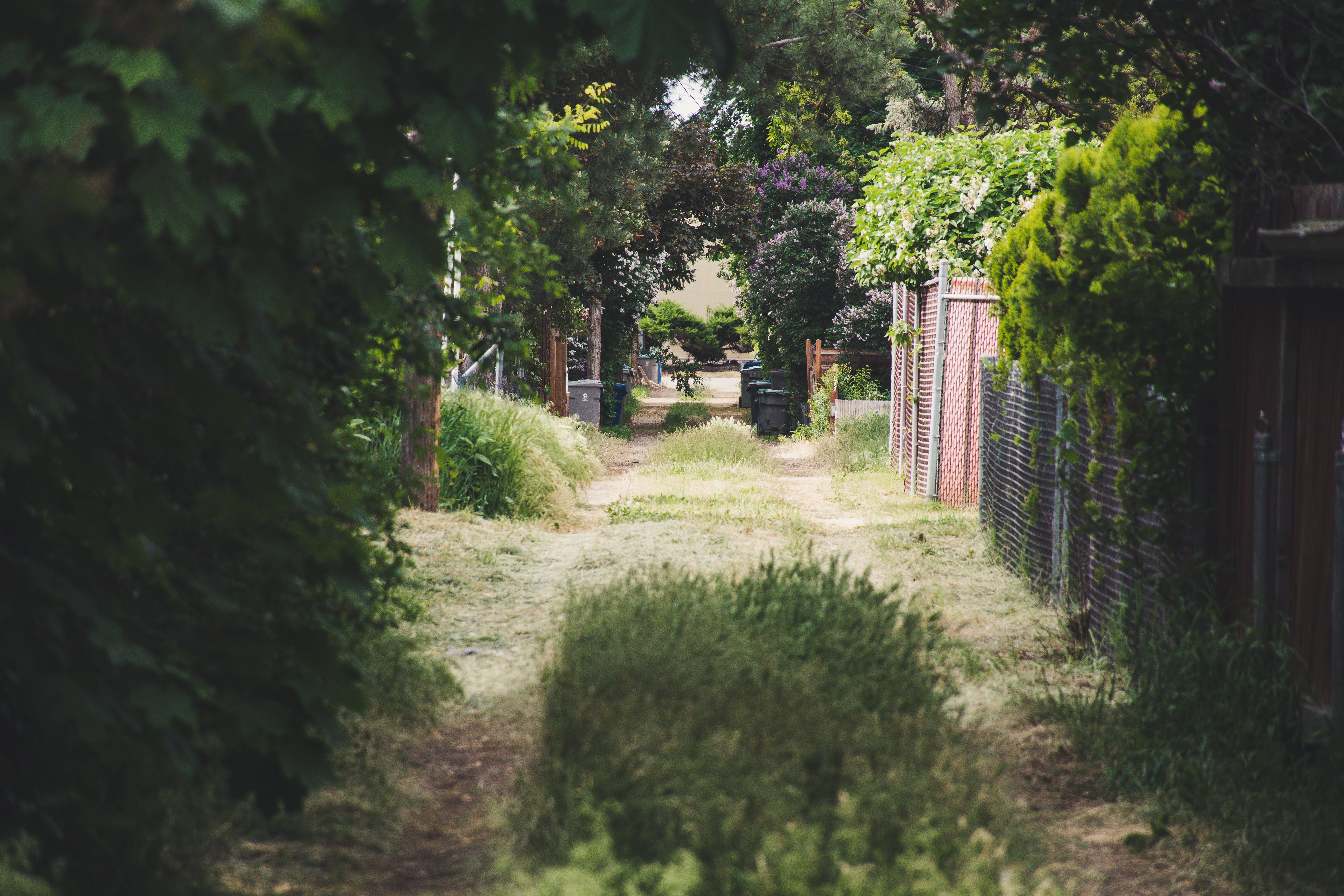 Foto d'estoc gratuïta de arbres, arquitectura, carretera, clareja