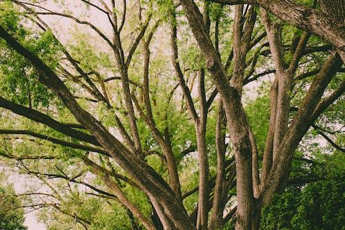 Бесплатное стоковое фото с ветвь, дерево, деревья, дневной свет