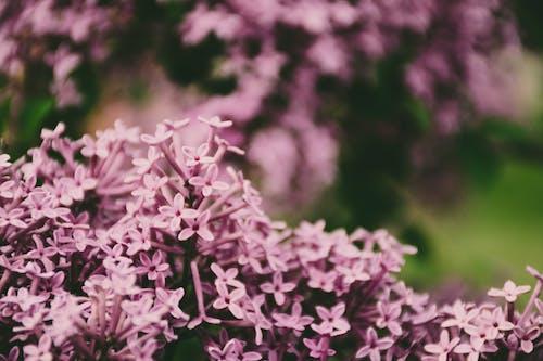 Kostnadsfri bild av blomma, blomning, buske, färg